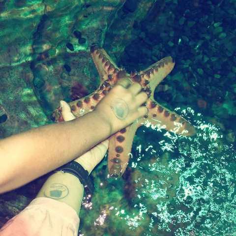 Berinteraksi langsung dengan bintang laut